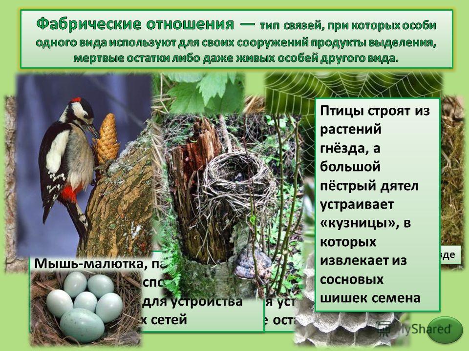 Бельчата в гнезде Белка использует для устройства гнезда растительные остатки Мышь-малютка, пауки и бумажная оса используют растительность для устройства жилищ и ловчих сетей Птицы строят из растений гнёзда, а большой пёстрый дятел устраивает «кузниц