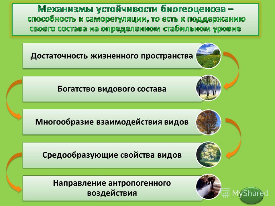 Достаточность жизненного пространства Богатство видового состава Многообразие взаимодействия видов Средообразующие свойства видов Направление антропогенного воздействия