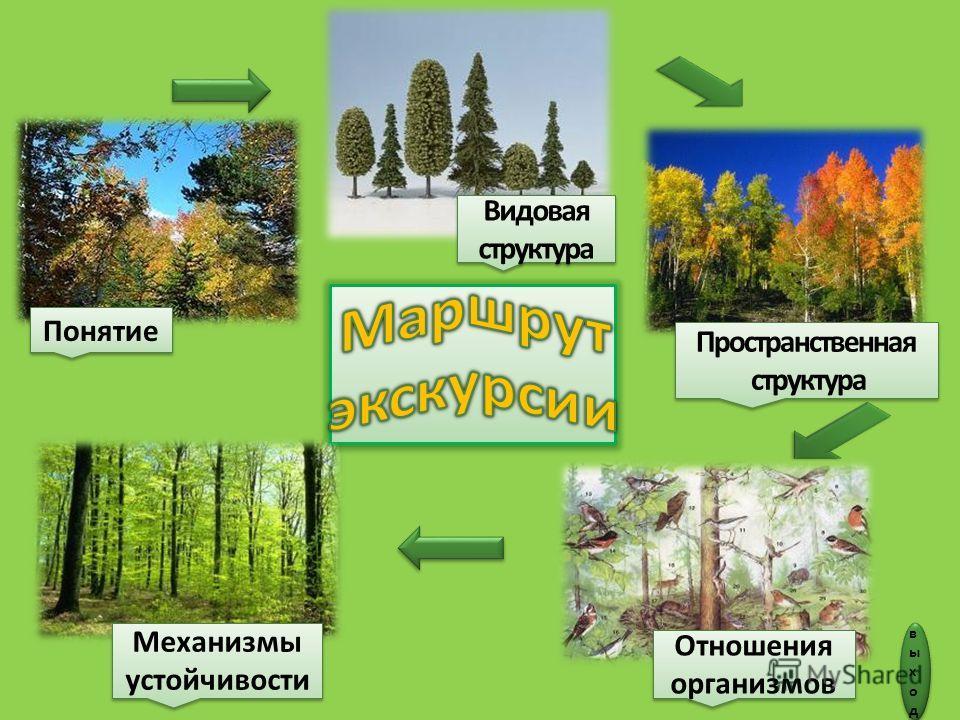 Понятие Пространственная структура Пространственная структура Отношения организмов Видовая структура Механизмы устойчивости выходвыход выходвыход