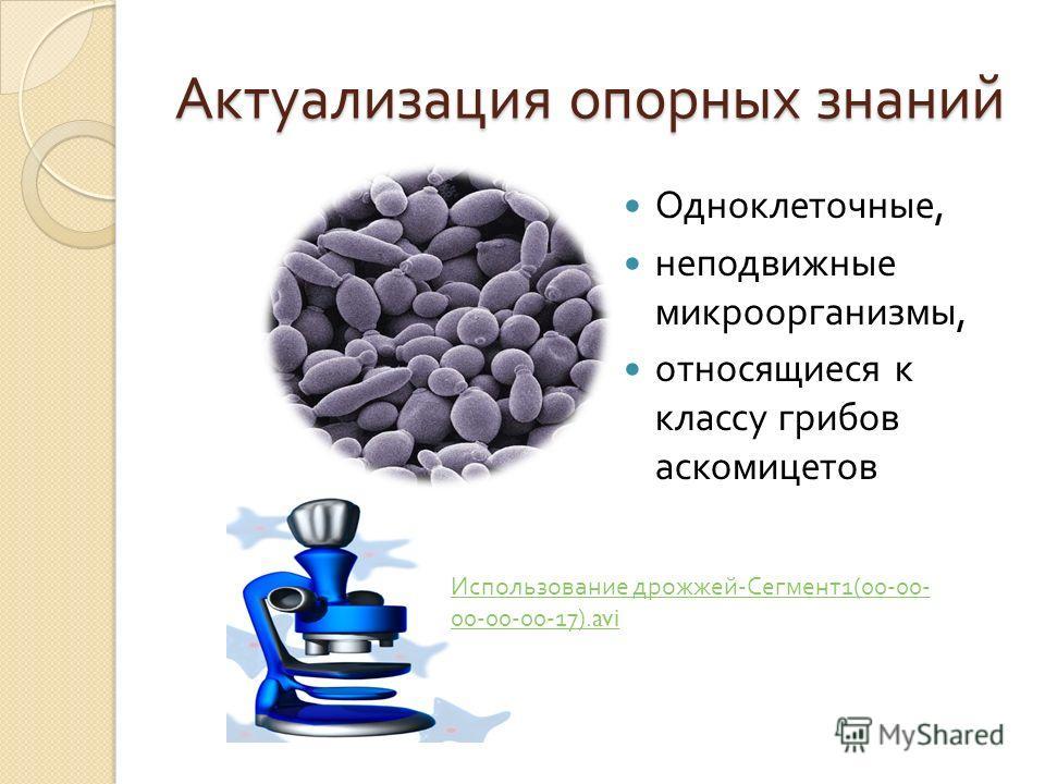 Актуализация опорных знаний Одноклеточные, неподвижные микроорганизмы, относящиеся к классу грибов аскомицетов Использование дрожжей - Сегмент 1(00-00- 00-00-00-17).avi