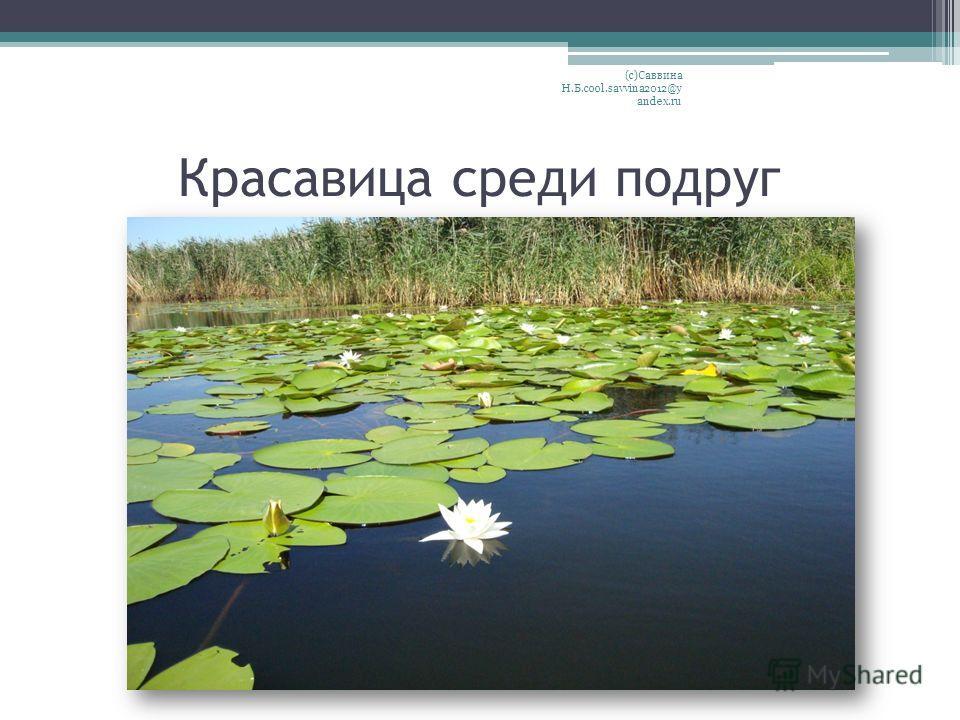 Красавица среди подруг (с)Саввина Н.Б.cool.savvina2012@y andex.ru
