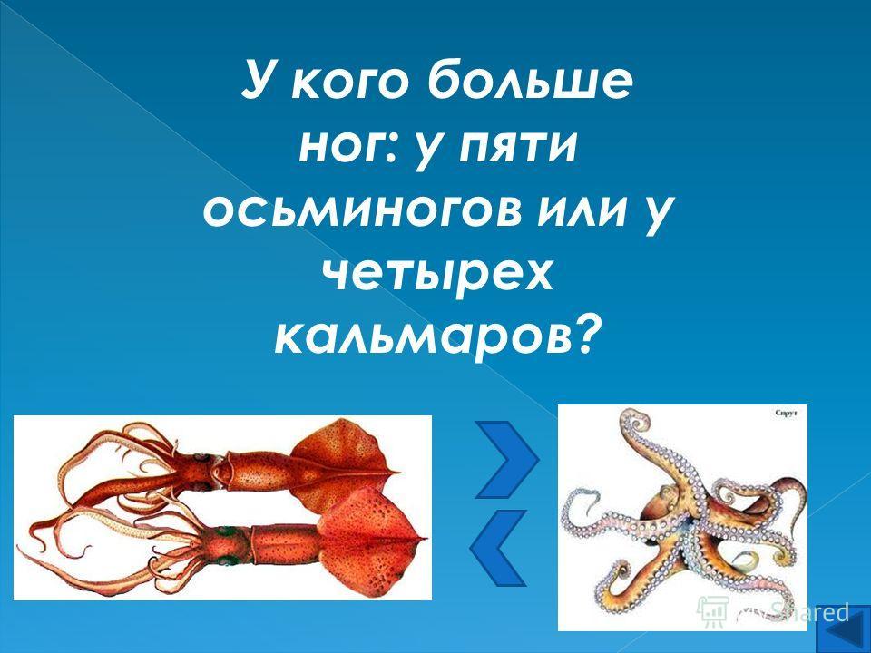 У кого больше ног: у пяти осьминогов или у четырех кальмаров?