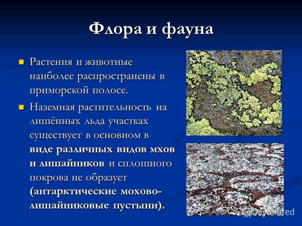 Флора и фауна Растения и животные наиболее распространены в приморской полосе. Растения и животные наиболее распространены в приморской полосе. Наземная растительность на лишённых льда участках существует в основном в виде различных видов мхов и лиша
