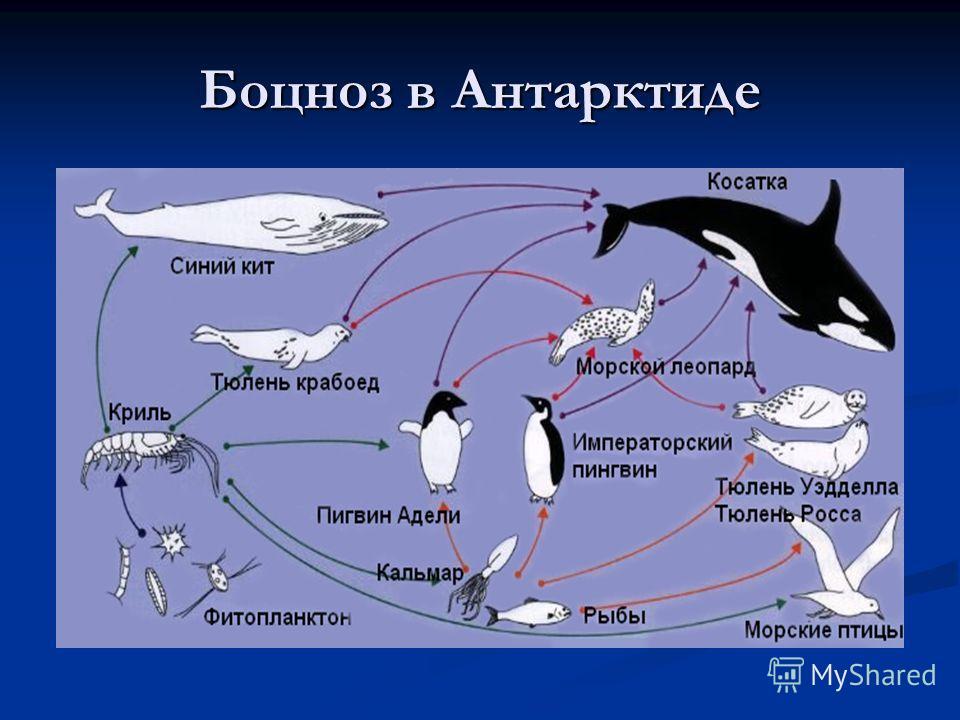 Боцноз в Антарктиде