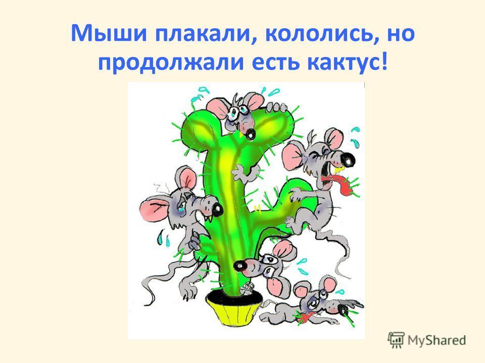 Мыши плакали, кололись, но продолжали есть кактус!