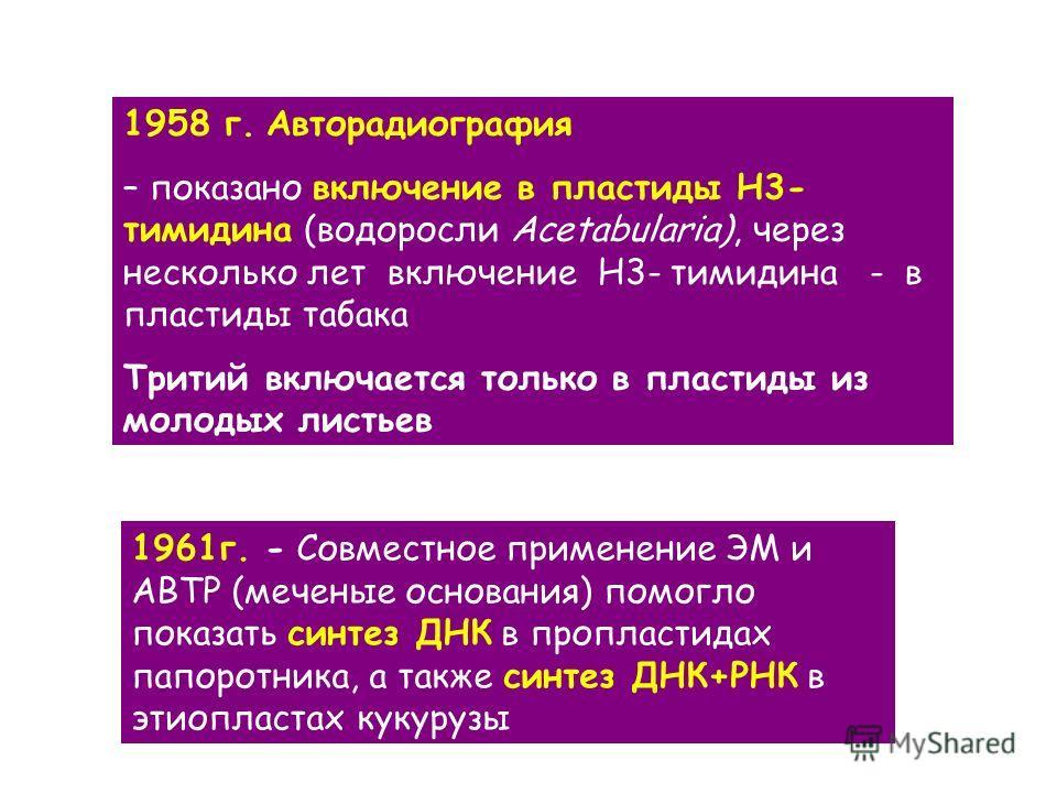 1958 г. Авторадиография – показано включение в пластиды Н3- тимидина (водоросли Acetabularia), через несколько лет включение Н3- тимидина - в пластиды табака Тритий включается только в пластиды из молодых листьев 1961 г. - Совместное применение ЭМ и