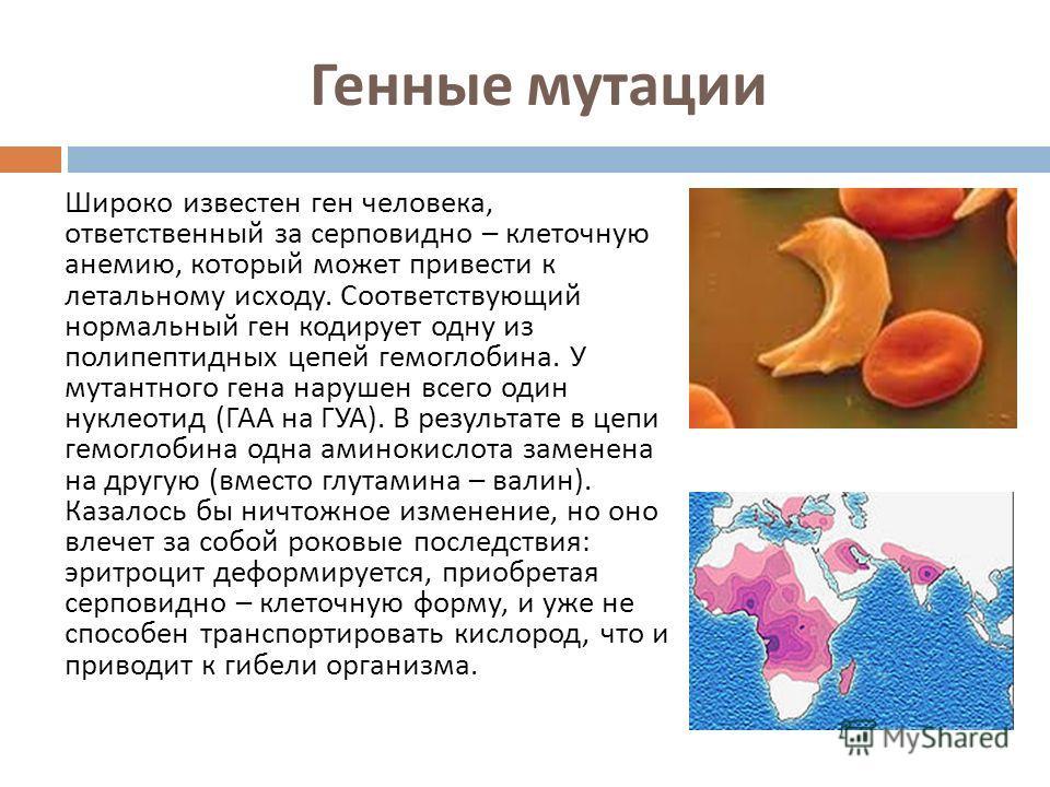 Генные мутации Широко известен ген человека, ответственный за серповидно – клеточную анемию, который может привести к летальному исходу. Соответствующий нормальный ген кодирует одну из полипептидных цепей гемоглобина. У мутантного гена нарушен всего