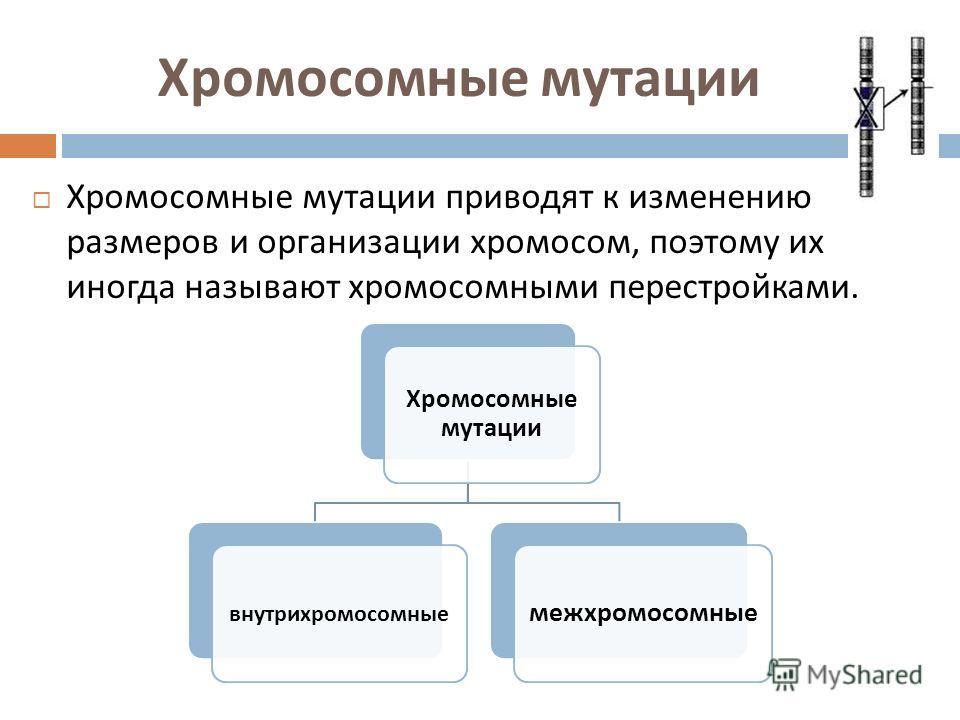 Хромосомные мутации Хромосомные мутации приводят к изменению размеров и организации хромосом, поэтому их иногда называют хромосомными перестройками. Хромосомные мутации внутрихромосомные межхромосомные