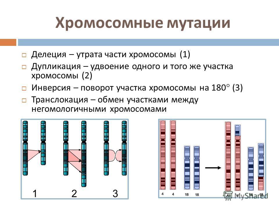 Хромосомные мутации Делеция – утрата части хромосомы (1) Дупликация – удвоение одного и того же участка хромосомы (2) Инверсия – поворот участка хромосомы на 180 (3) Транслокация – обмен участками между негомологичными хромосомами
