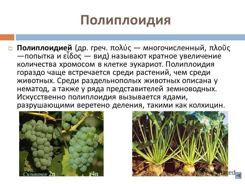 Полиплоидия Полиплоидией ( др. греч. πολύς многочисленный, πλος попытка и εδος вид ) называют кратное увеличение количества хромосом в клетке эукариот. Полиплоидия гораздо чаще встречается среди растений, чем среди животных. Среди раздельнополых живо