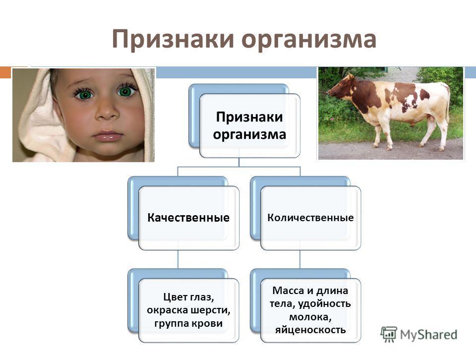 Признаки организма Качественные Цвет глаз, окраска шерсти, группа крови Количественные Масса и длина тела, удойность молока, яйценоскость
