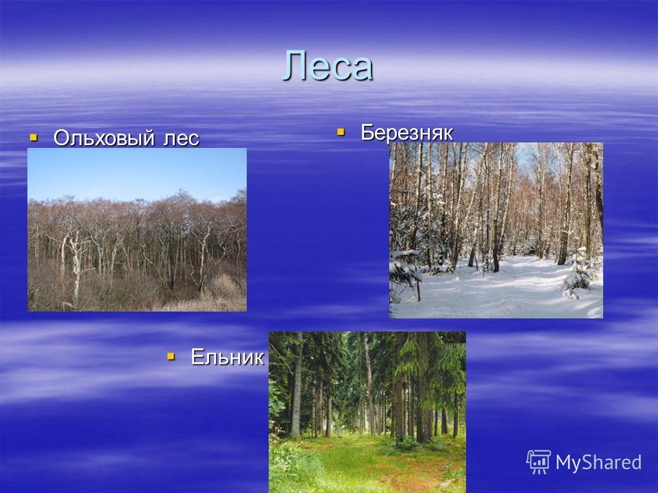 Леса Ольховый лес Ольховый лес Березняк Березняк Ельник Ельник