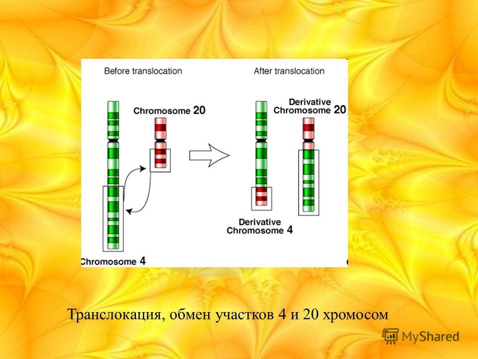 Транслокация, обмен участков 4 и 20 хромосом