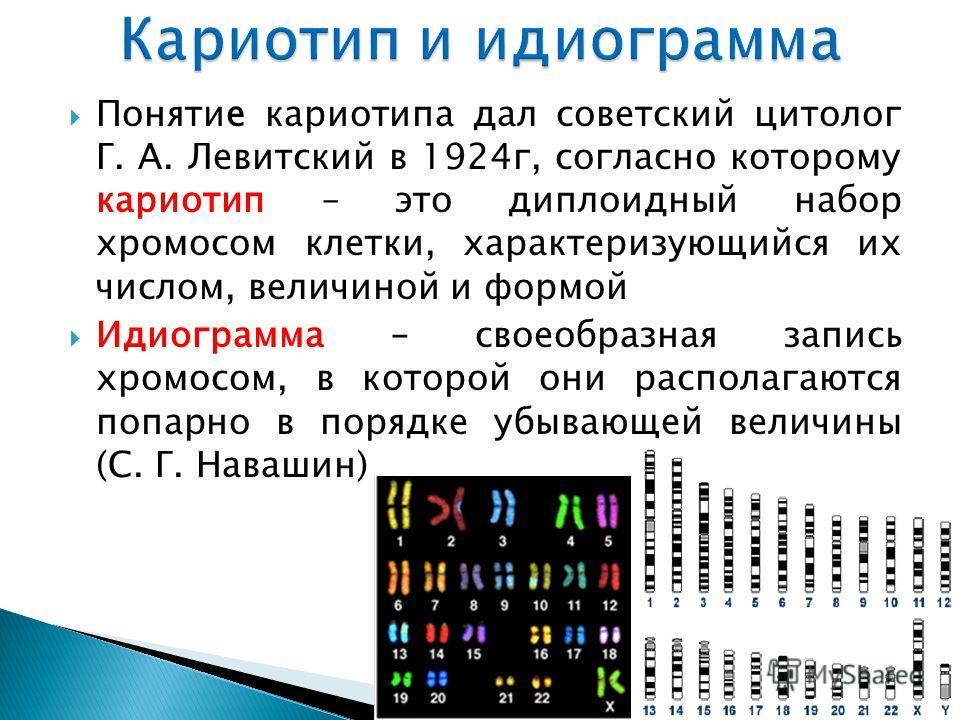 Понятие кариотипа дал советский цитолог Г. А. Левитский в 1924 г, согласно которому кариотип – это диплоидный набор хромосом клетки, характеризующийся их числом, величиной и формой Идиограмма – своеобразная запись хромосом, в которой они располагаютс