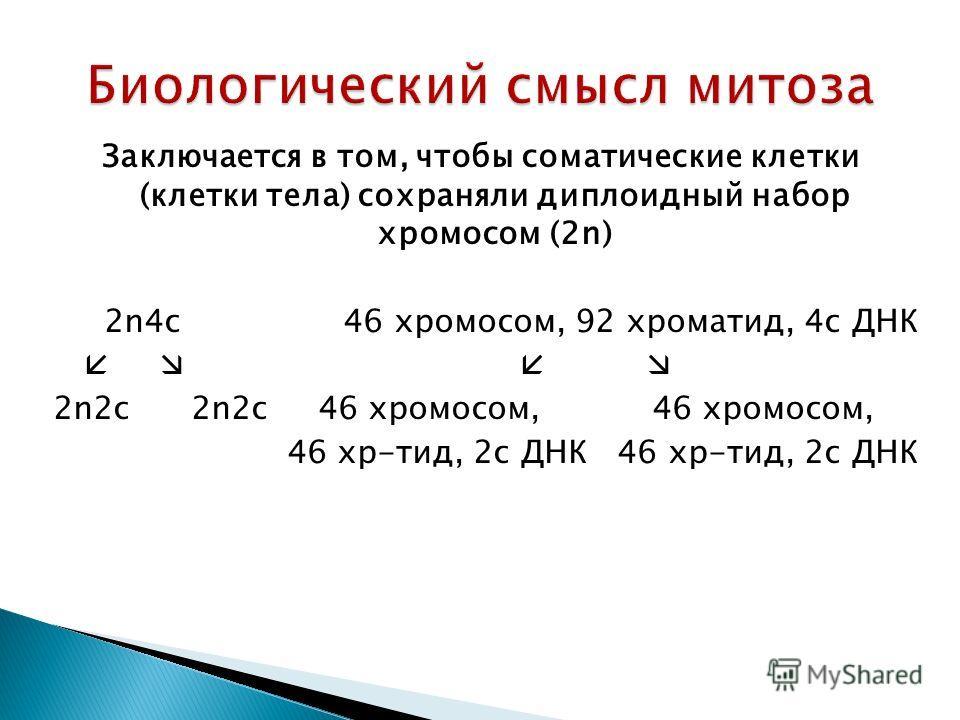 Заключается в том, чтобы соматические клетки (клетки тела) сохраняли диплоидный набор хромосом (2n) 2n4c 46 хромосом, 92 хроматит, 4 с ДНК 2n2c 2n2c 46 хромосом, 46 хромосом, 46 хр-тит, 2 с ДНК 46 хр-тит, 2 с ДНК