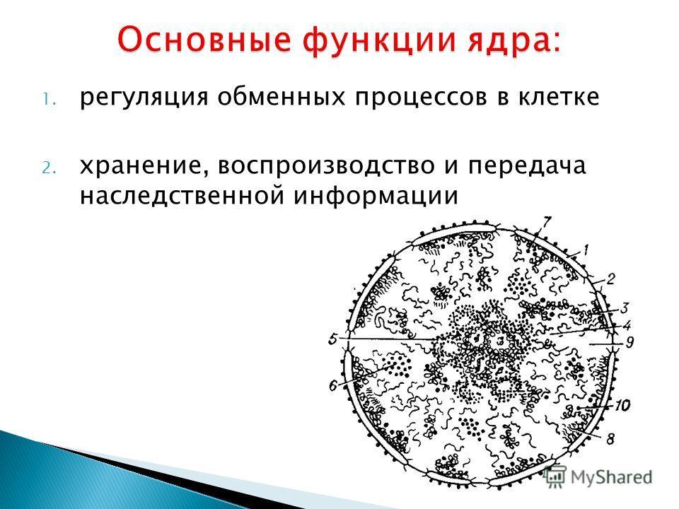 1. регуляция обменных процессов в клетке 2. хранение, воспроизводство и передача наследственной информации