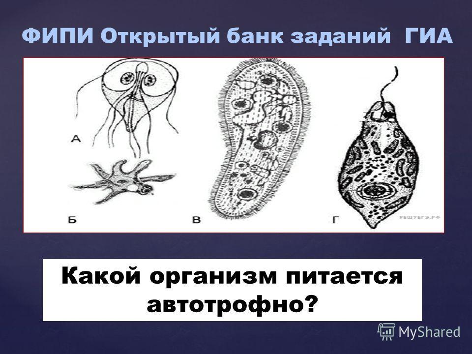 { Какой организм питается автотрофное?