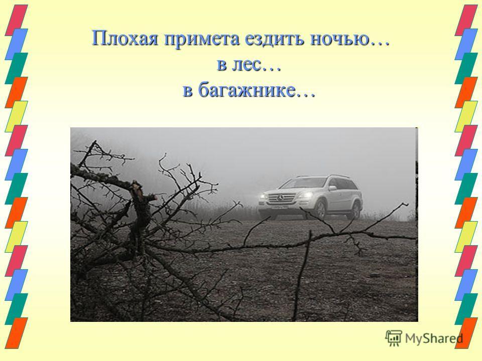 Плохая примета ездить ночью… в лес… в багажнике…