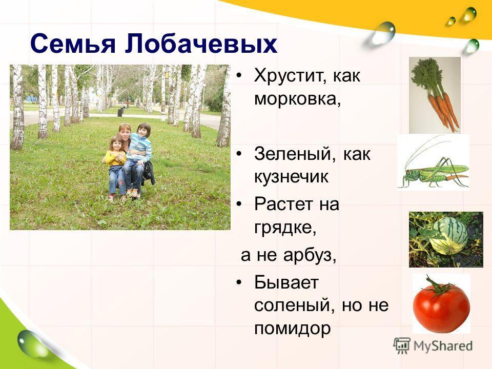 Семья Лобачевых Хрустит, как морковка, Зеленый, как кузнечик Растет на грядке, а не арбуз, Бывает соленый, но не помидор