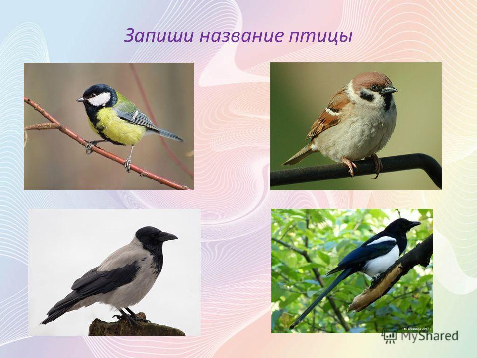 Запиши название птицы