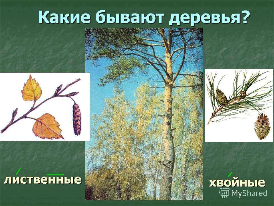 лиственные Какие бывают деревья? хвойные