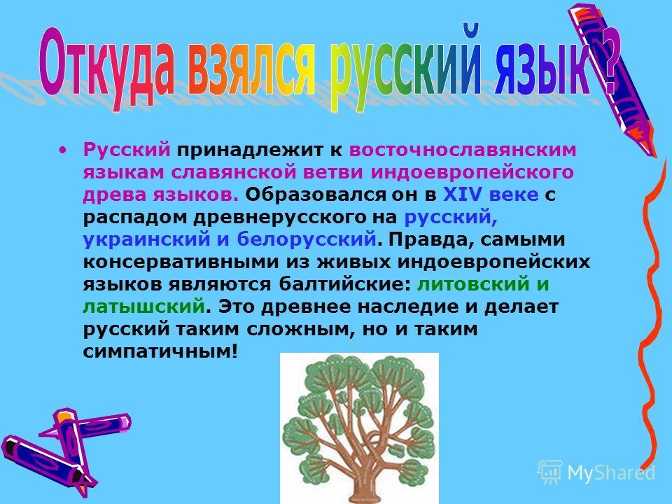 Русский принадлежит к восточнославянским языкам славянской ветви индоевропейского древа языков. Образовался он в XIV веке с распадом древнерусского на русский, украинский и белорусский. Правда, самыми консервативными из живых индоевропейских языков я
