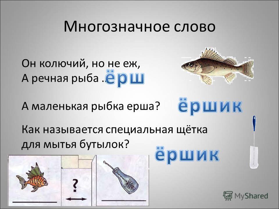 Многозначное слово Он колючий, но не еж, А речная рыба … А маленькая рыбка ерша? Как называется специальная щётка для мытья бутылок?