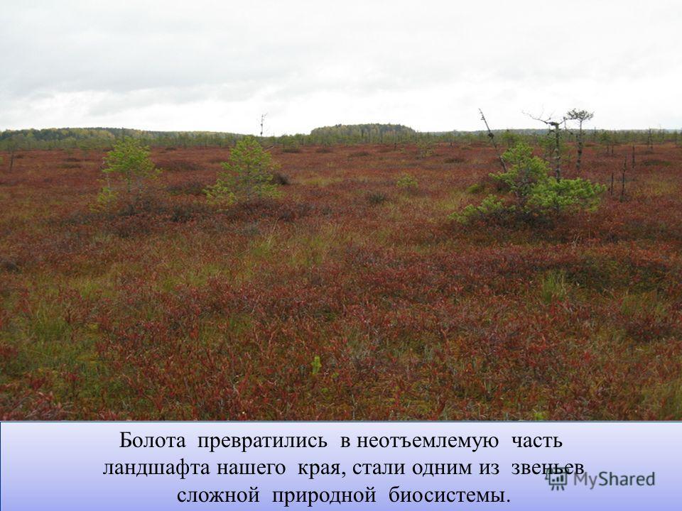 Болота превратились в неотъемлемую часть ландшафта нашего края, стали одним из звеньев сложной природной биосистемы. Болота превратились в неотъемлемую часть ландшафта нашего края, стали одним из звеньев сложной природной биосистемы.