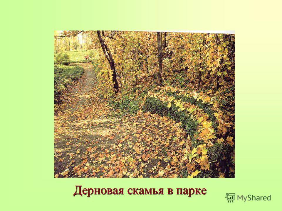 Дерновая скамья в парке