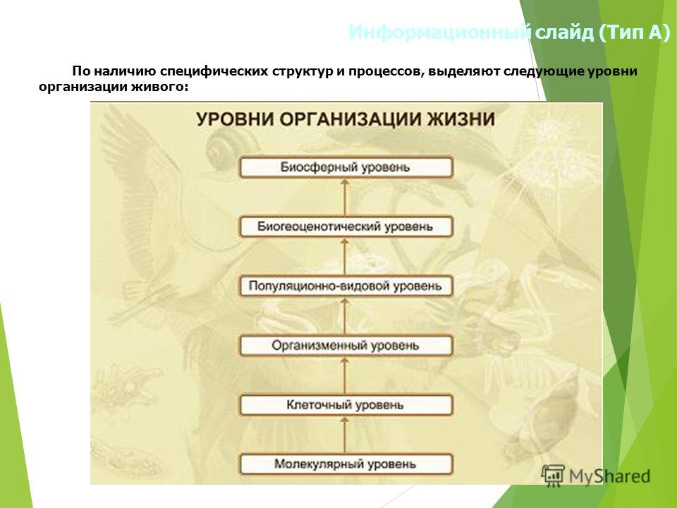 Информационный слайд (Тип А) По наличию специфических структур и процессов, выделяют следующие уровни организации живого: