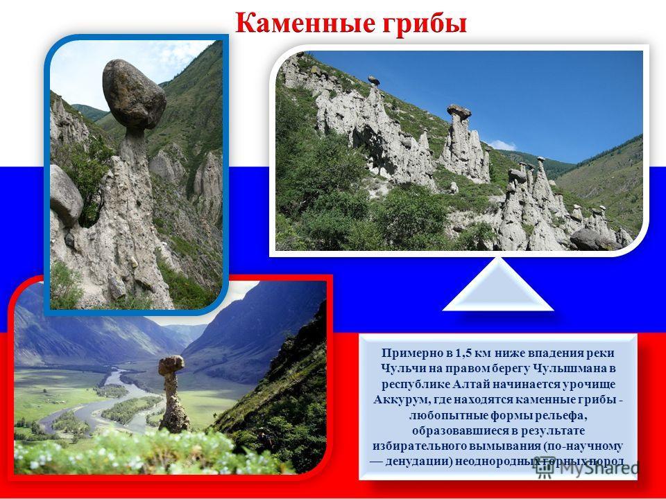Примерно в 1,5 км ниже впадения реки Чульчи на правом берегу Чулышмана в республике Алтай начинается урочище Аккурум, где находятся каменные грибы - любопытные формы рельефа, образовавшиеся в результате избирательного вымывания (по-научному денудации