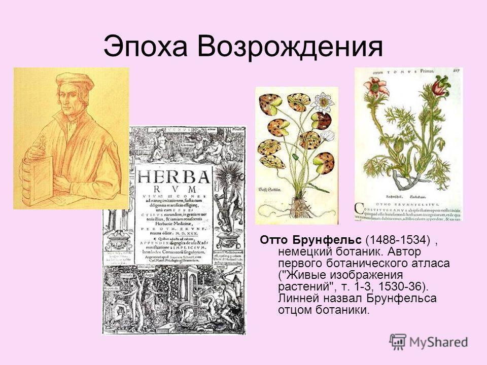 Эпоха Возрождения Отто Брунфельс (1488-1534), немецкий ботаник. Автор первого ботанического атласа (Живые изображения растений, т. 1-3, 1530-36). Линней назвал Брунфельса отцом ботаники.