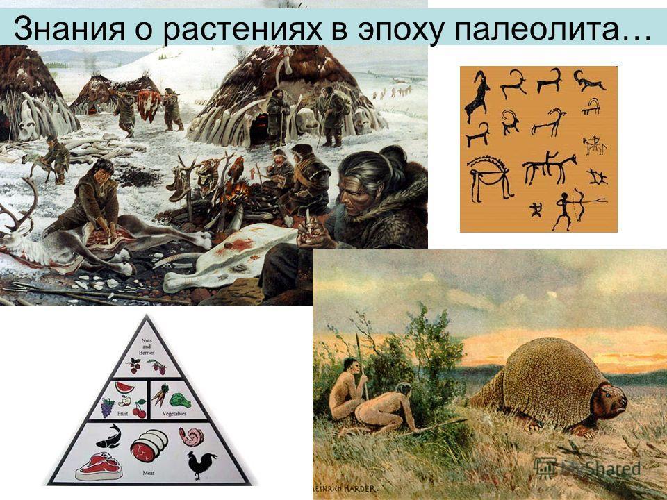 Знания о растениях в эпоху палеолита…