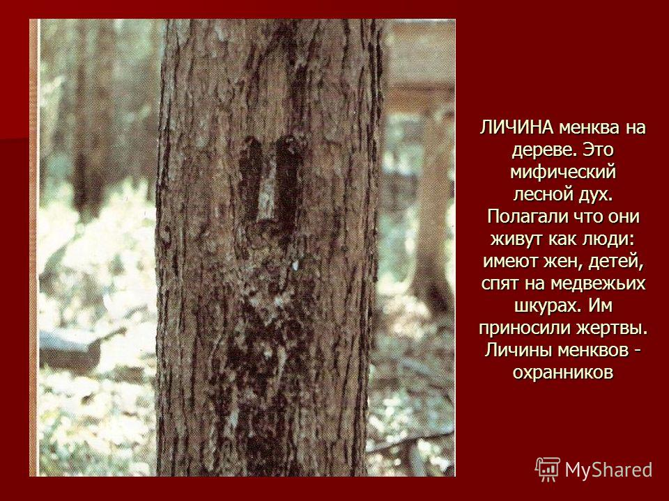 ЛИЧИНА менква на дереве. Это мифический лесной дух. Полагали что они живут как люди: имеют жен, детей, спят на медвежьих шкурах. Им приносили жертвы. Личины менквов - охранников