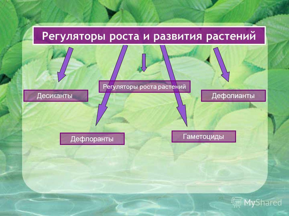 Регуляторы роста и развития растений Дефлоранты Десиканты Дефолианты Гаметоциды Регуляторы роста растений