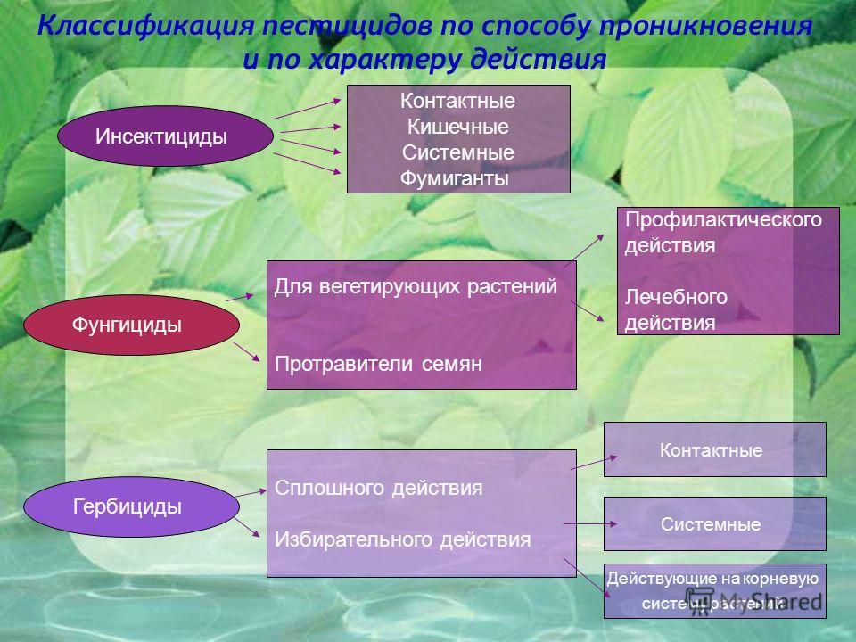 Классификация пестицидов по способу проникновения и по характеру действия Инсектициды Контактные Кишечные Системные Фумиганты Фунгициды Для вегетирующих растений Протравители семян Профилактического действия Лечебного действия Гербициды Сплошного дей