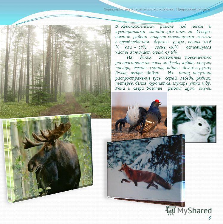 В Краснохолмском районе под лесом и кустарниками занято 46,2 тыс. га Северо- восток района покрыт смешанными лесами с преобладанием березы – 34,9%, осины -20,6 %, ели – 27%, сосны -16%, оставшуюся часть занимает ольха -15,8% Из диких животных повсеме