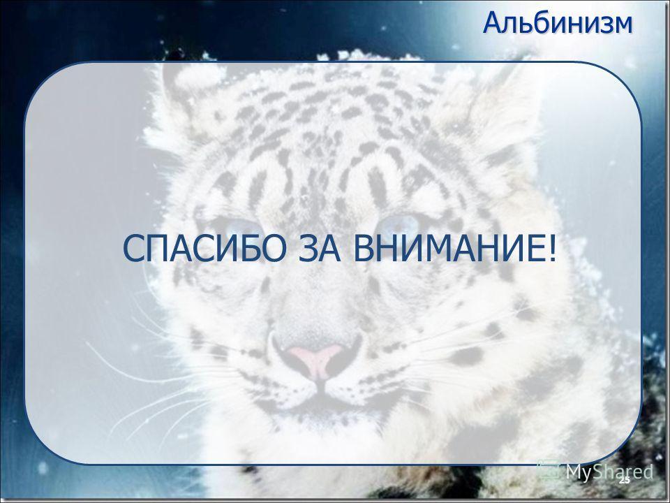 25Альбинизм СПАСИБО ЗА ВНИМАНИЕ! 25