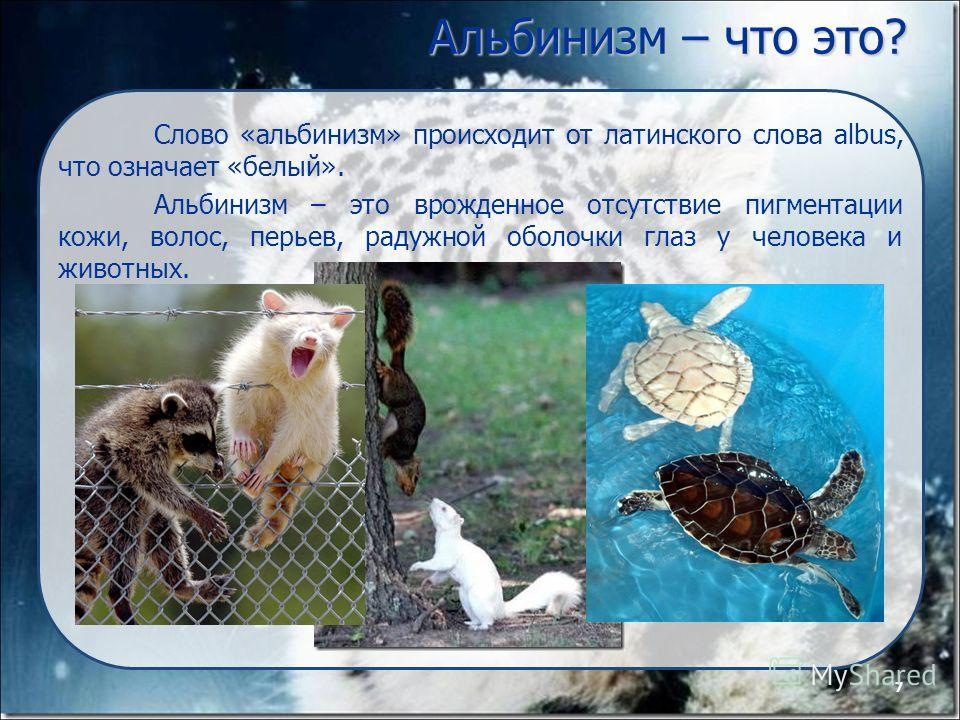 7 Альбинизм – что это? Слово «альбинизм» происходит от латинского слова albus, что означает «белый». Альбинизм – это врожденное отсутствие пигментации кожи, волос, перьев, радужной оболочки глаз у человека и животных. 7