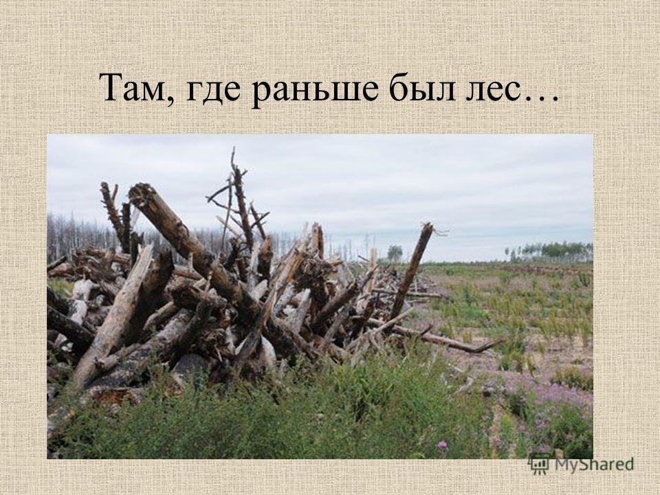 В 2010 году в Воронежской области сгорело более 15 тысяч гектаров леса из примерно 500 тысяч гектаров всех лесных территорий. А ведь чтобы вырастить такой лес, понадобится не менее 45 лет.