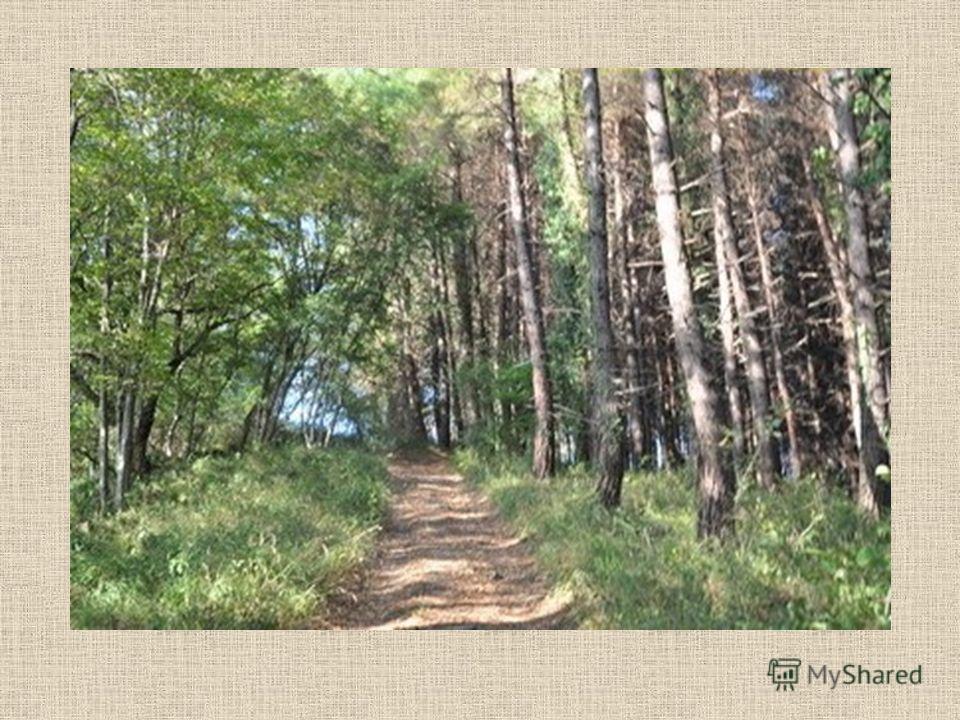 Сохраним красоту леса!