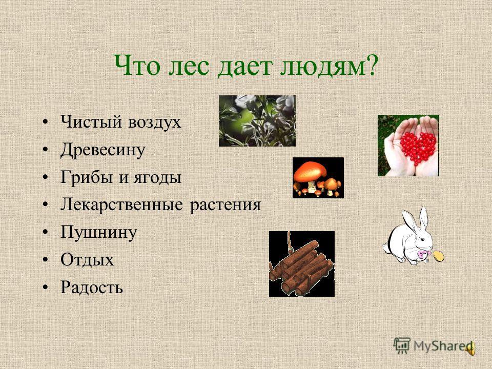 Что такое лес? Лес – это дом для животных и птиц. Лес – легкие планеты. Лес – кладовая лекарственных растений. Лес – экосистема. Лес – материалы для строительства. Лес – место для отдыха людей.
