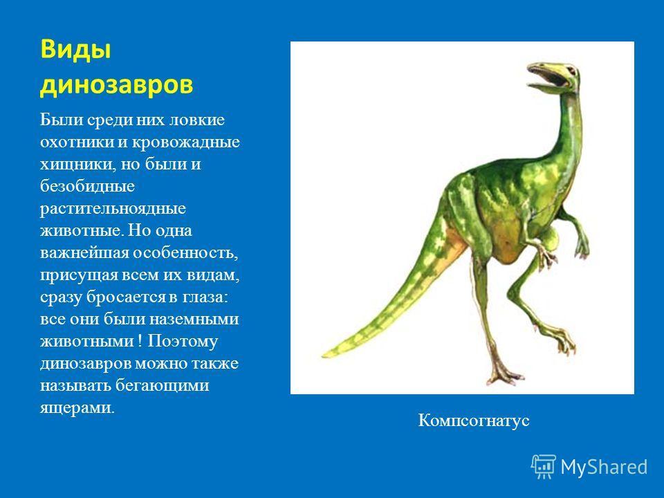Виды динозавров Были среди них ловкие охотники и кровожадные хищники, но были и безобидные растительноядные животные. Но одна важнейшая особенность, присущая всем их видам, сразу бросается в глаза: все они были наземными животными ! Поэтому динозавро
