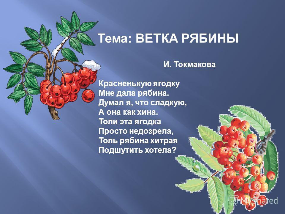Тема : ВЕТКА РЯБИНЫ И. Токмакова Красненькую ягодку Мне дала рябина. Думал я, что сладкую, А она как хина. Толи эта ягодка Просто недозрелая, Толь рябина хитрая Подшутить хотела ?