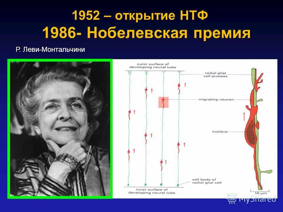 1952 – открытие НТФ 1986- Нобелевская премия Р. Леви-Монтальчини