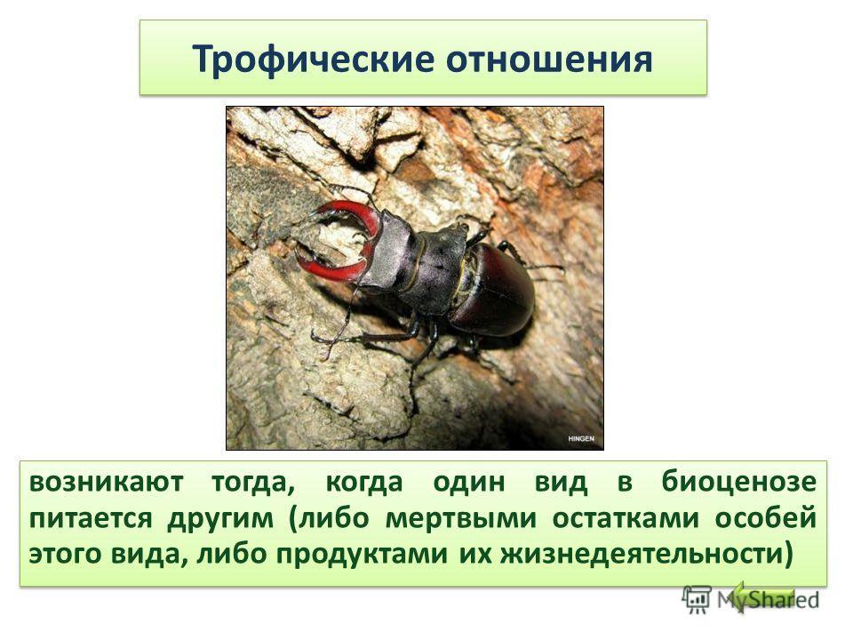 Трофические отношения возникают тогда, когда один вид в биоценозе питается другим (либо мертвыми остатками особей этого вида, либо продуктами их жизнедеятельности)