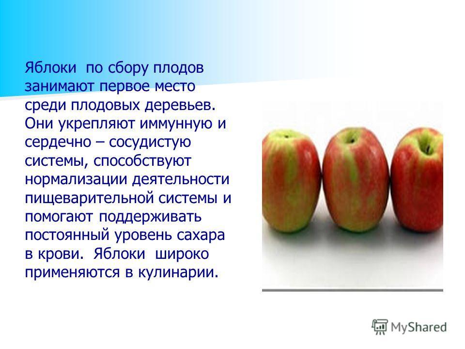 Яблоки по сбору плодов занимают первое место среди плодовых деревьев. Они укрепляют иммунную и сердечно – сосудистую системы, способствуют нормализации деятельности пищеварительной системы и помогают поддерживать постоянный уровень сахара в крови. Яб