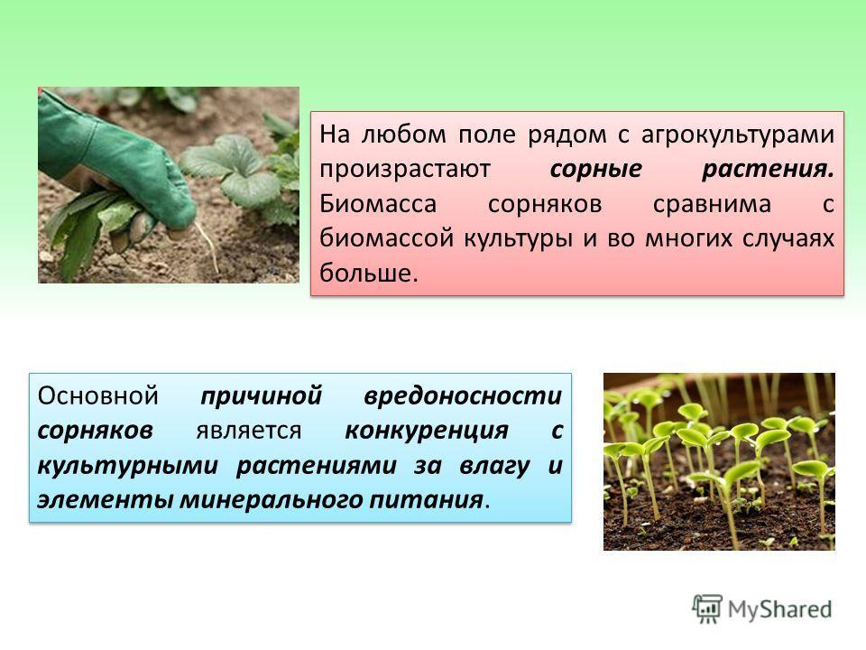 Основной причиной вредоносности сорняков является конкуренция с культурными растениями за влагу и элементы минерального питания. На любом поле рядом с агрокультурами произрастают сорные растения. Биомасса сорняков сравнима с биомассой культуры и во м