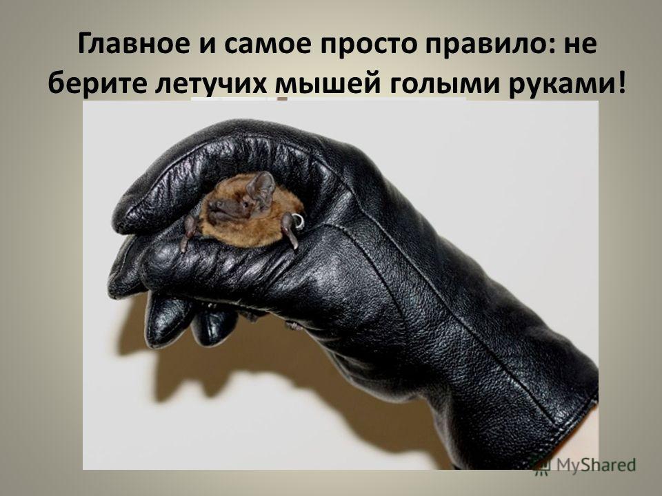 Главное и самое просто правило: не берите летучих мышей голыми руками!