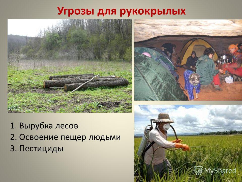 Угрозы для рукокрылых 1. Вырубка лесов 2. Освоение пещер людьми 3.Пестициды